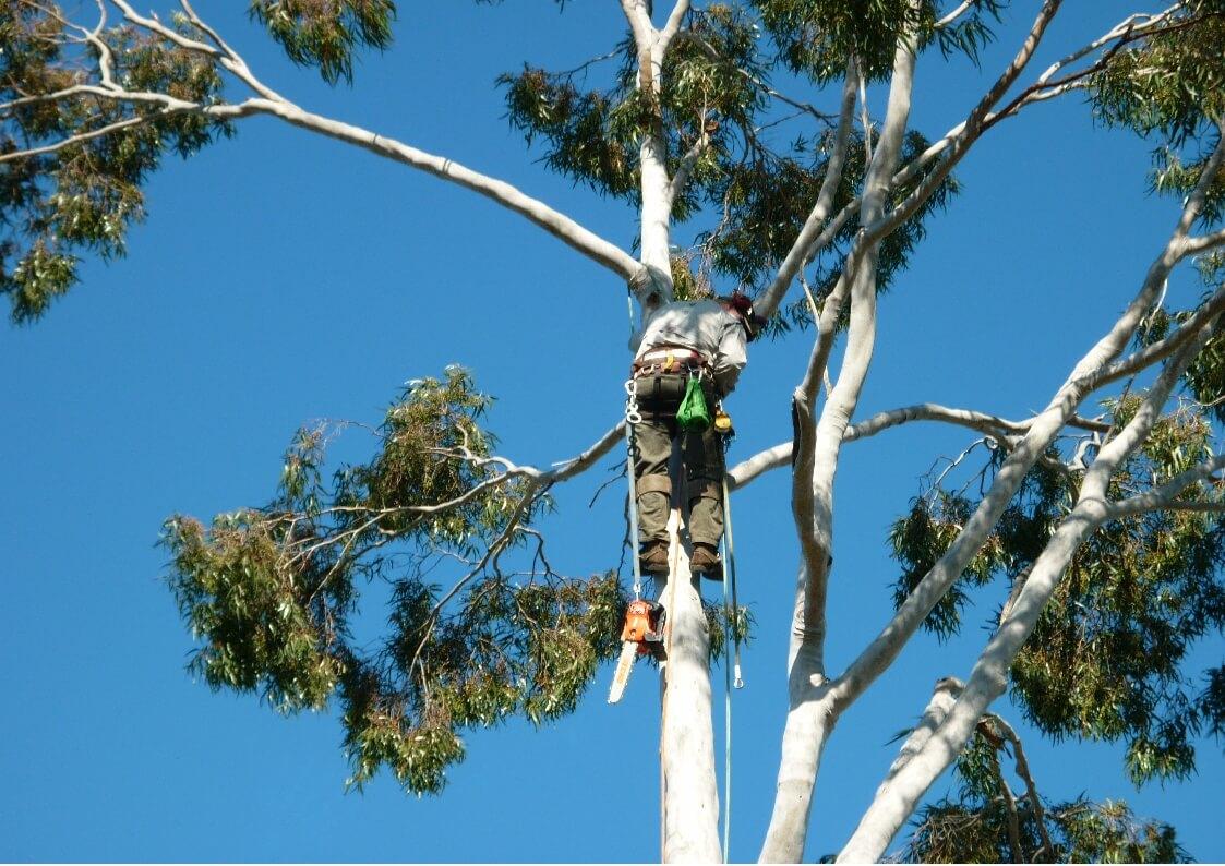gold coast tree services image 13