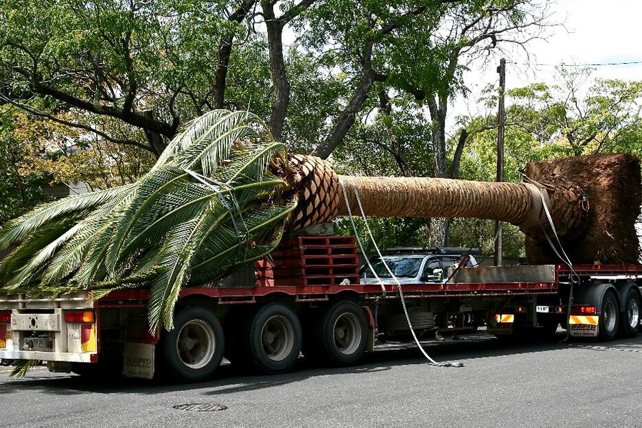 gold-coast-tree-services-image-3