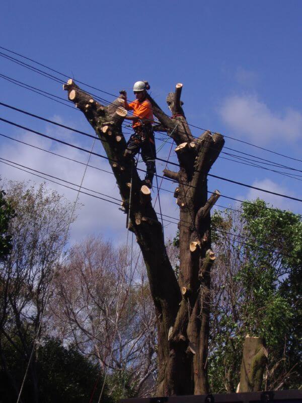gold coast tree services image 37