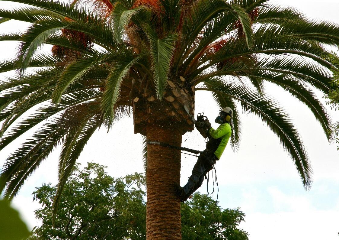 tree service gold coast image 1