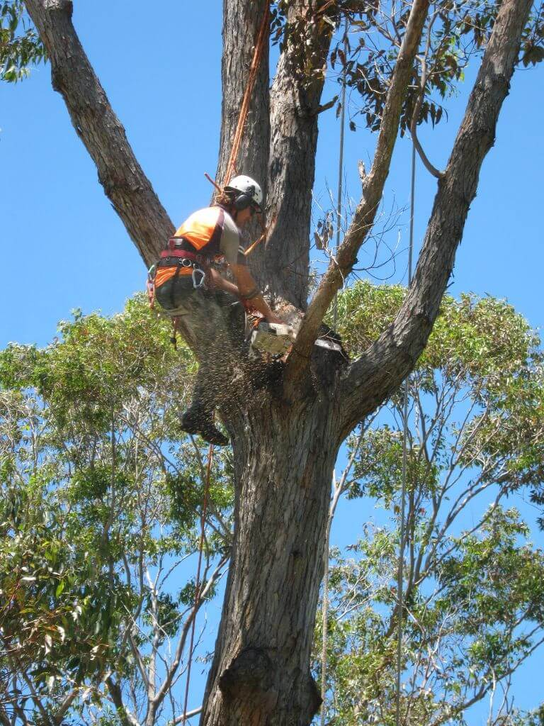 tree services gold coast image 102