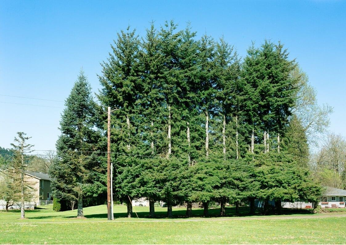 tree services gold coast image 118