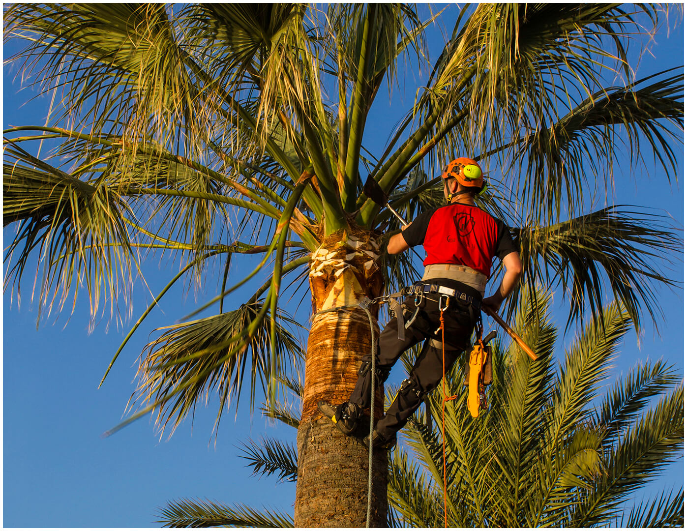 tree services gold coast image 120