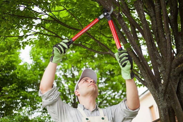 tree services gold coast image 125