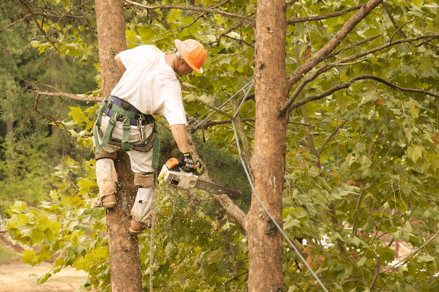 tree services gold coast image 130