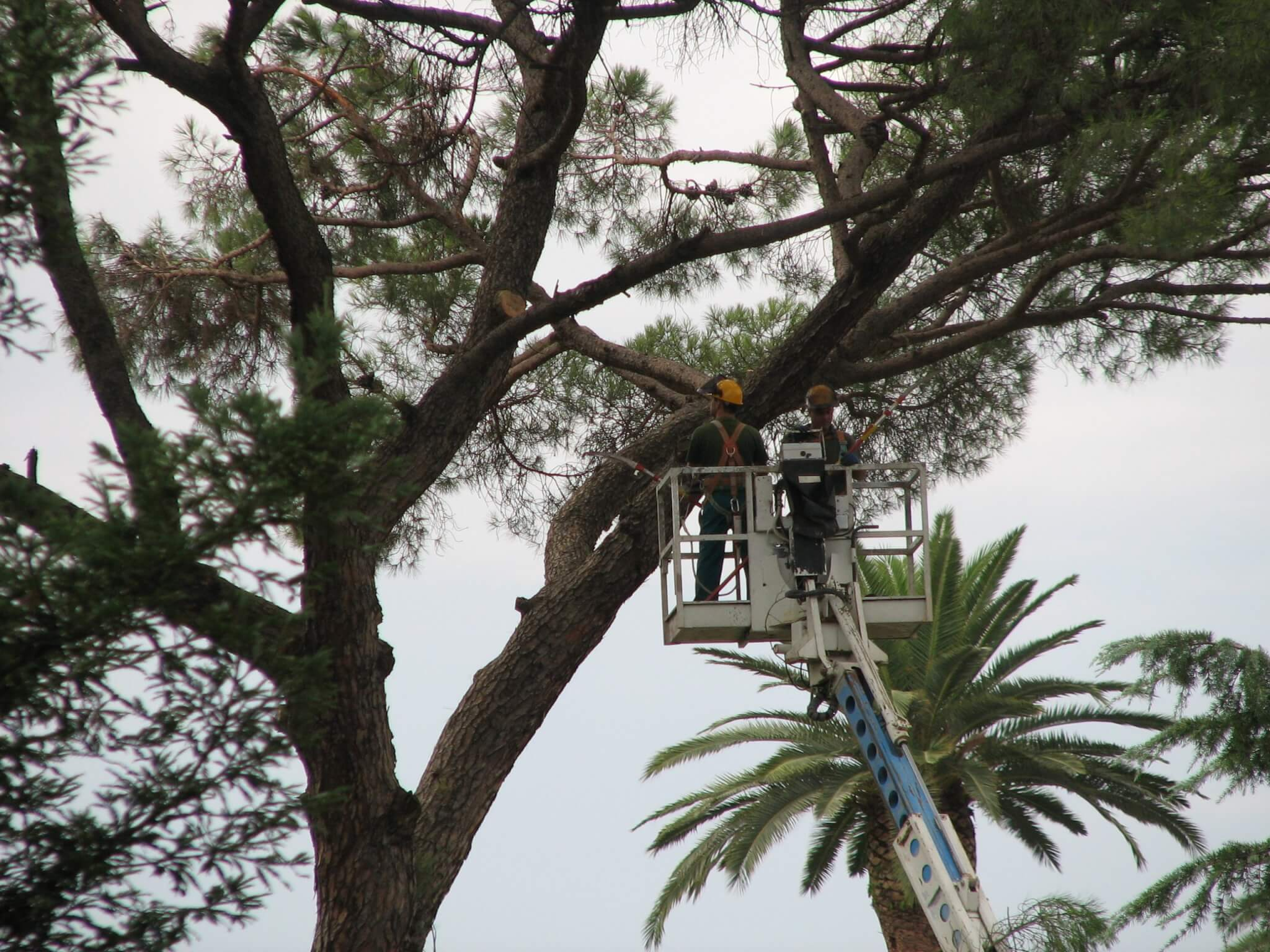 tree services gold coast image 151