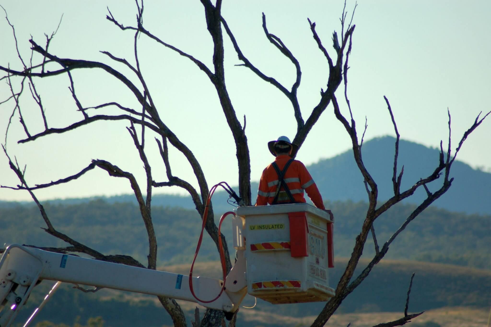 tree services goldcoast image 11