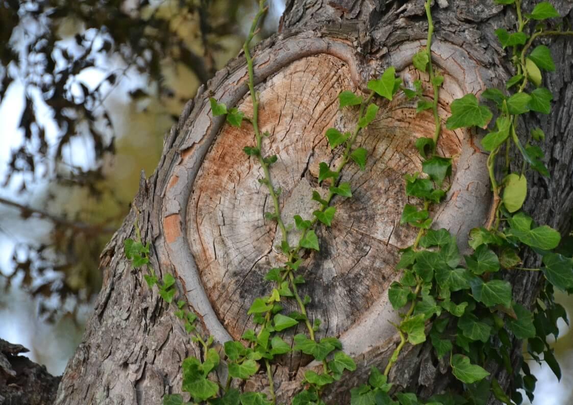 tree services goldcoast image 17