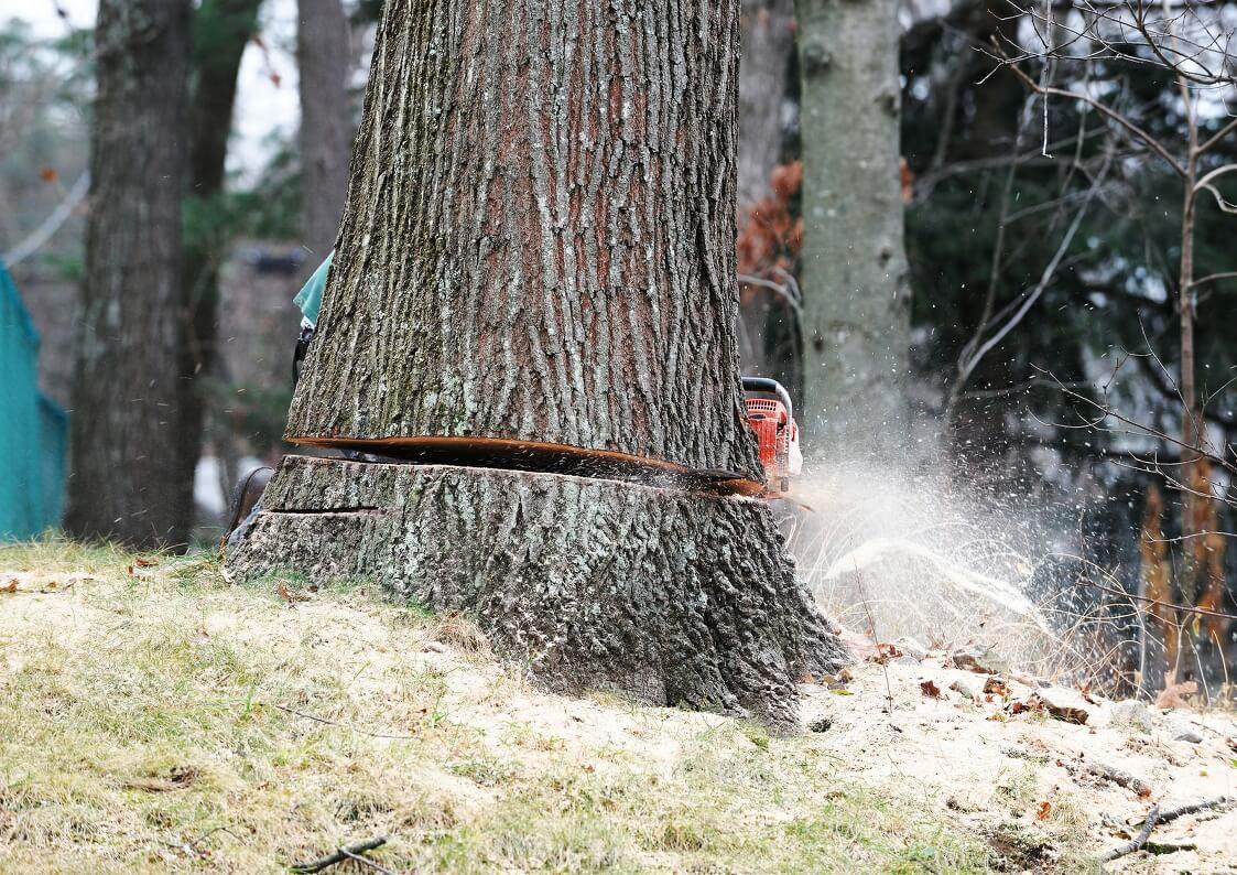 tree services goldcoast image 21