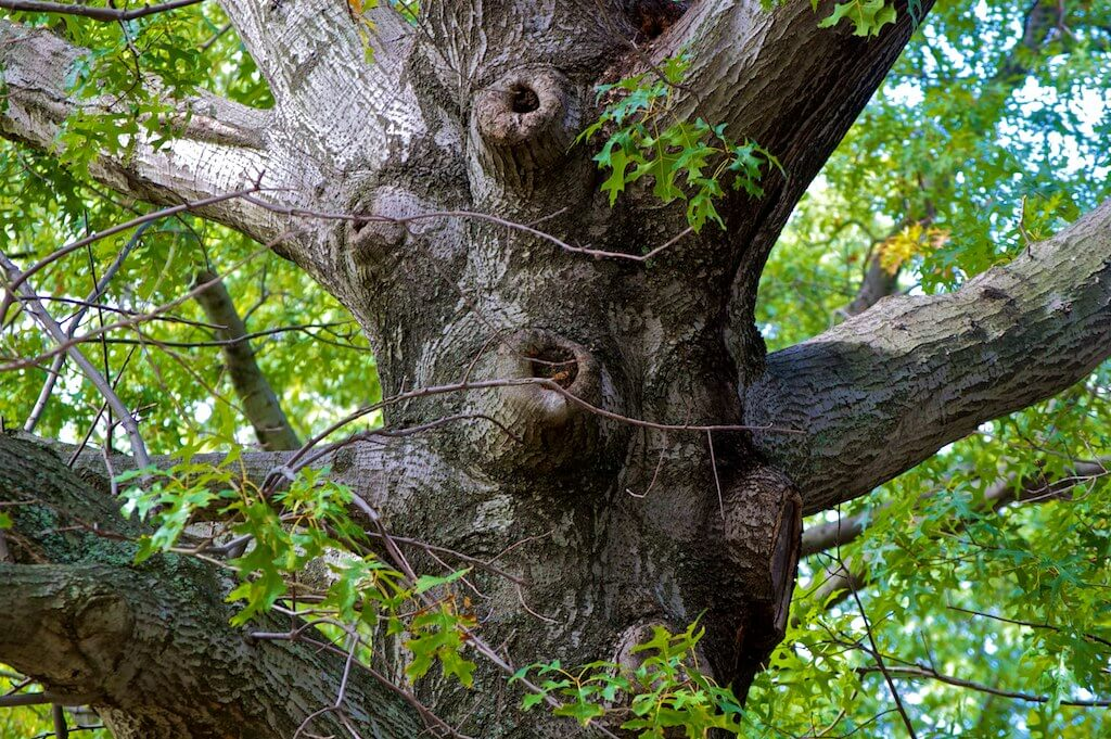 tree services goldcoast image 3