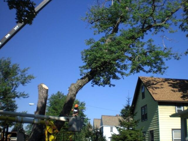 tree services image 18